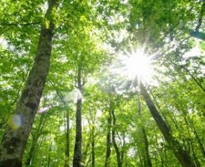 ストレス ニキビ 森林浴 浴びる